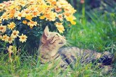 Kuzia - ältere Katze (12 y Lizenzfreie Stockfotos