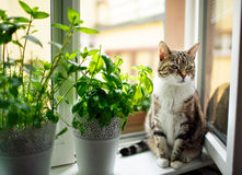 Kuzia - ältere Katze (12 y Stockbild