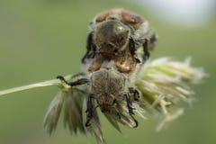 Kuzka 2 жуков сидеть в траве летом стоковое изображение rf