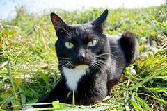 Kuzya逗人喜爱的猫 库存图片