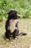 Kuzya de hond Stock Foto
