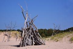 Kvävde träd Arkivbild