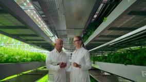 Kvalitets- kontrollteknikerer med minnestavladatoren som går till och med modernt växthus, undersöker och diskuterar grönsaken lager videofilmer