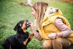 Kvalitets- tid för utgifter med hunden - utbildning och spela med valpen royaltyfri fotografi