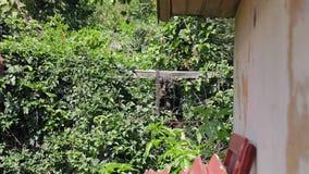 Kvarlämnad fattig hund staketet som hela dagen gör ingenting långsam mo-längd i fot räknat arkivfilmer