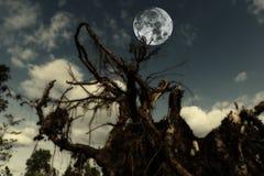 Kvarlevor av en förstörd skog Royaltyfri Bild