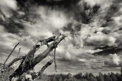 Kvarlevor av en förstörd skog Arkivbild