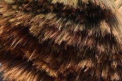 Kvastfiber för torrt gräs Arkivfoton