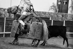 Kvigan rams lancer'sens häst Arkivbilder