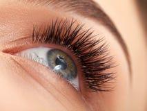 Kvinnaöga med långa ögonfrans. Ögonfransförlängning Royaltyfria Bilder