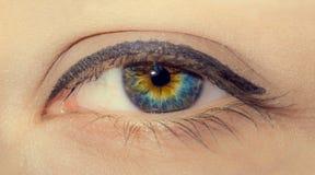 Kvinnaöga med målade långa ögonfrans och yrkesmässig sminknärbild royaltyfri foto