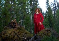 Kvinna den mystiska skogen Arkivfoto