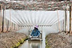 kvinna för bondeväxtvatten Arkivfoto