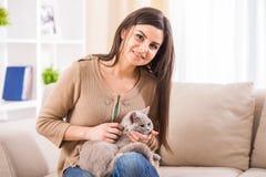 kvinna för kattcoonmaine silver Royaltyfri Foto