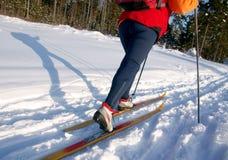 kvinna för skier för skog för landskorsdag solig Royaltyfria Foton