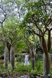 Kvinna i den tropiska skogKoko Crater botaniska trädgården med konstiga träd från Madagascar arkivbilder