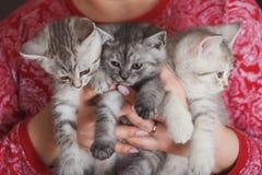 Kvinna i ett rött omslag som rymmer liten päls- grå kattunge tre arkivbilder