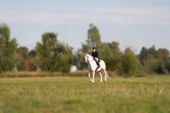 Kvinna i fältet som galopperar på en vit häst Arkivbilder