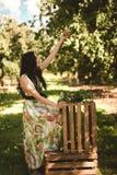 Kvinna i färgrik maxi klänning med asken med äpplen i en solig gar Fotografering för Bildbyråer