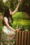 Kvinna i färgrik maxi klänning med asken med äpplen i en solig gar Arkivfoton