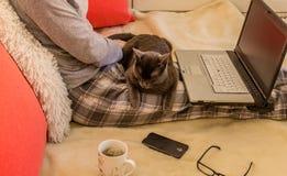 Kvinna i pyjamas med katten i hennes varv genom att använda en bärbar dator med glasse Arkivbilder