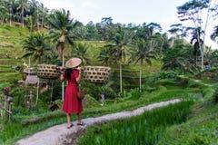 Kvinna i rött med korgar i risfält royaltyfri bild
