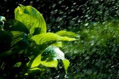 Kvinna i trädgården fuktighet kondenserade från den atmosfären nedgångar V royaltyfri fotografi