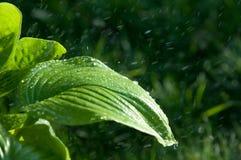 Kvinna i trädgården fuktighet kondenserade från den atmosfären nedgångar V royaltyfri foto