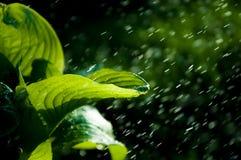 Kvinna i trädgården fuktighet kondenserade från den atmosfären nedgångar V royaltyfria bilder