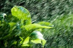Kvinna i trädgården fuktighet kondenserade från den atmosfären nedgångar V royaltyfri bild