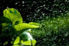 Kvinna i trädgården fuktighet kondenserade från den atmosfären nedgångar V arkivfoton