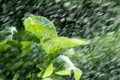 Kvinna i trädgården fuktighet kondenserade från den atmosfären nedgångar V fotografering för bildbyråer