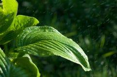 Kvinna i trädgården fuktighet kondenserade från den atmosfären nedgångar V arkivbild