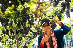 Kvinna i vingård med den organiska nya druvan för frukt och vin arkivbild