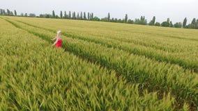 Kvinna med blont hår i en röd klänning som går i fältet med vete stock video