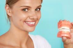 Kvinna med härligt leende, sunda tänder som rymmer den tand- modellen Royaltyfria Foton
