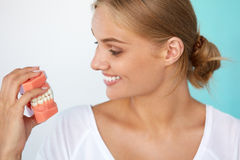 Kvinna med härligt leende, sunda tänder som rymmer den tand- modellen Arkivbild