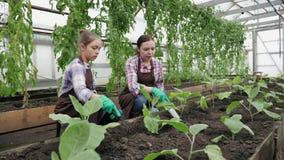 Kvinna med hennes dotter som arbetar i växthuset stock video