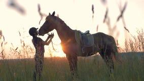 Kvinna med hennes häst på en solnedgångbakgrund arkivfilmer
