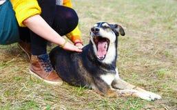 Kvinna med hunden i vårängar le för hund Royaltyfria Bilder