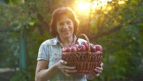 Kvinna med korgen av äpplen stock video