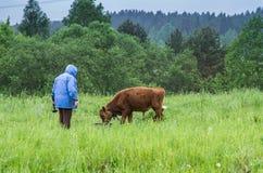 Kvinna och en ko Royaltyfri Foto