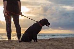 Kvinna och hund på solnedgången Arkivfoto