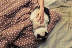 Kvinna och katt i säng Arkivbild