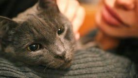 Kvinna och katt Våldsam vresig fullblods- katt Roliga hemhjälphusdjur Närbild av kattögon