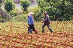 Kvinna och man som går på fältet Fotografering för Bildbyråer