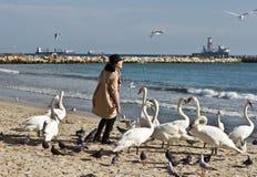 Kvinna och svanar på stranden arkivfoton