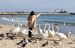 Kvinna och svanar på stranden arkivbilder