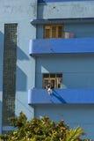 Kvinna på blå balkonghavannacigarr Royaltyfria Bilder