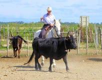 Kvinna på den vita hästen och svarttjur Royaltyfria Bilder
